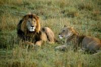 Encantos do Kenya (Safari 4x4)