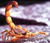 Combate a escorpioes