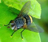 Controle moscas