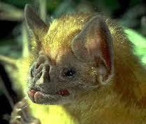 Expulsão de morcegos e limpeza do local.