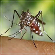 Combate a mosquitas