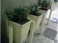 Venda de Plantas