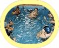 Alunos em piscina