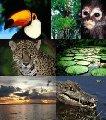 Amazonas - 5 dias e 4 noites