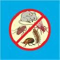 Desratização, desinfecção e desinfestação