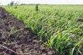 Страхование в сфере сельского хозяйства