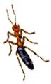 Combate a formigas