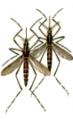 Combate a mosquitos