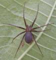 Combate aranhas