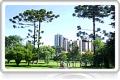 Pacote - Curitiba